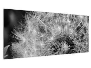 Slika - paperje maslačaka (V020117V10040)