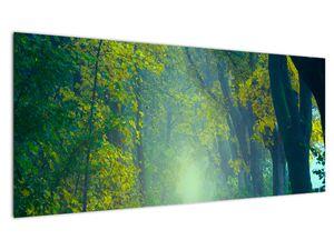 Slika staze obrubljene drvećem (V020165V10040)