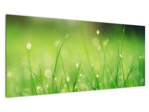 Obraz - rosa na trávě (V020169V10040)