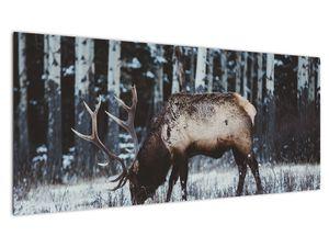 Obraz - jeleň v zime (V020179V10040)