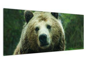 Slika medvjeda (V020185V10040)