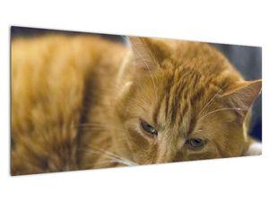 Obraz mačky (V020192V10040)