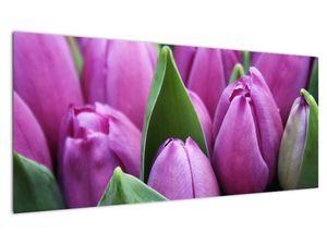 Slika - cvijeće tulipana (V020194V10040)