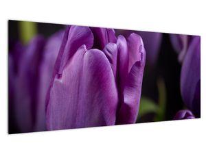 Obraz květů tulipánů (V020215V10040)