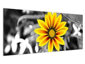 Obraz žluté květiny (V020361V10040)