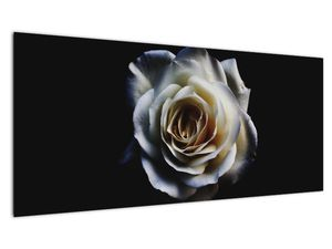 Obraz bílé růže (V020370V10040)