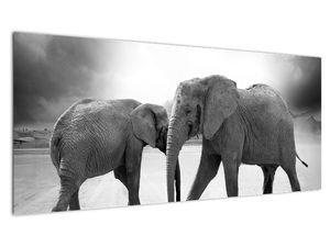 Slika - crno-bijeli slonovi (V020398V10040)