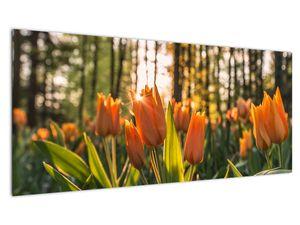 Obraz - oranžové tulipány (V020552V10040)