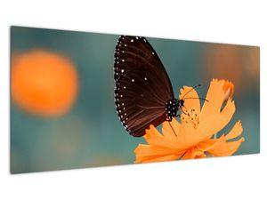 Obraz - motýl na oranžové květině (V020577V10040)