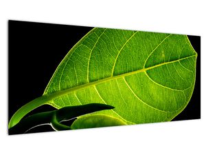 Obraz - zelený list (V020628V10040)