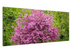 Obraz rozkvetlého stromu na louce (V020654V10040)