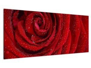 Obraz - detail růže (V020684V10040)