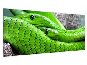 Obraz zelených hadů (V020689V10040)