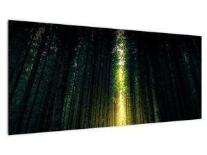 Obraz temného lesa (V020705V10040)