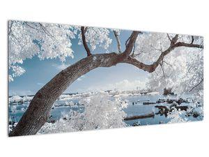 Obraz zasněženého stromu u vody (V020718V10040)