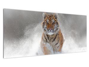 Obraz běžícího tygra ve sněhu (V020719V10040)