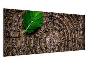 Obraz listu na kmeni stromu (V020813V10040)