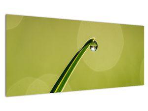 Obraz kapky vody na trávě (V020829V10040)