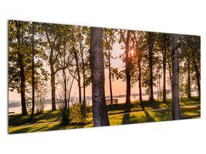 Slika drveća uz jezero (V020839V10040)