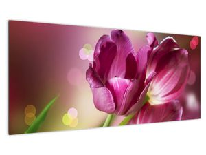 Obraz růžových tulipánů (V020887V10040)