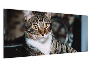 Obraz kočky (V020889V10040)