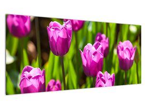 Obraz tulipánov na lúke (V020893V10040)