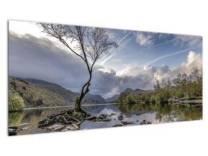 Obraz řeky se stromem (V020917V10040)