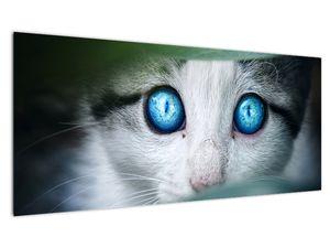 Obraz kočky (V020944V10040)