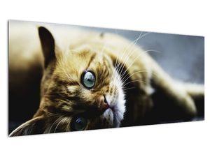 Obraz kočky (V020963V10040)