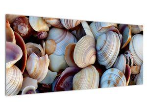 Kagyló képe (V021131V10040)