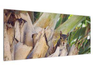 Obraz veverky na stromu (V021177V10040)