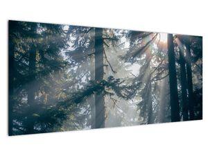 Slika drveća sa sunčevim zracima (V021195V10040)