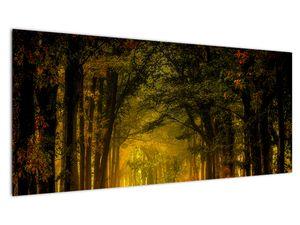 Slika šume (V021219V10040)