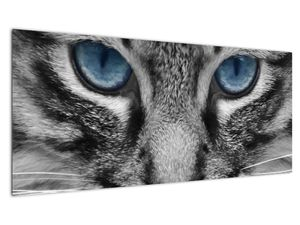 Obraz kočky (V021221V10040)
