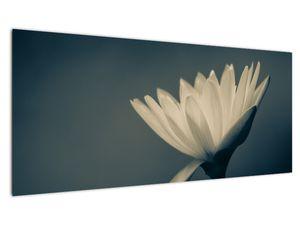 Obraz květiny (V021223V10040)
