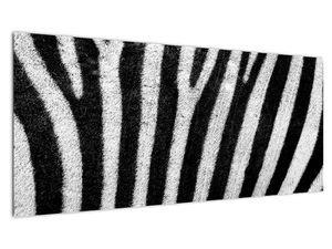 Slika kože zebre (V021235V10040)