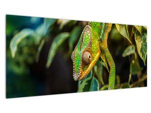 Obraz chameleona (V021236V10040)