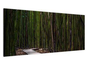Obraz - Medzi bambusy (V021324V10040)