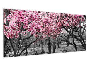 Obraz stromů Magnolíie (V021344V10040)