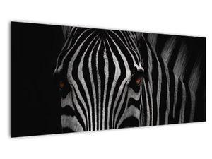 Slika zebre (V021389V10040)