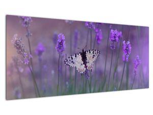 Slika - Leptir u lavandi (V021452V10040)