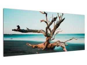 Slika - Naplavine na plaži (V021723V10040)