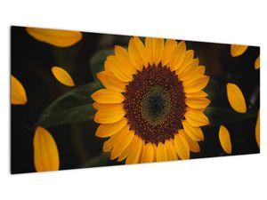 Slika - Suncokreti i latice cvijeta (V021736V10040)