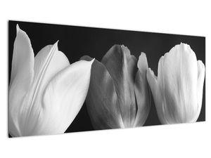 Kép - fekete-fehér tulipán virág (V021916V10040)
