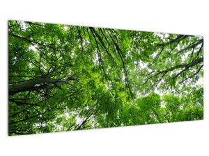 Slika - Pogled u krošnje drveća (V021918V10040)