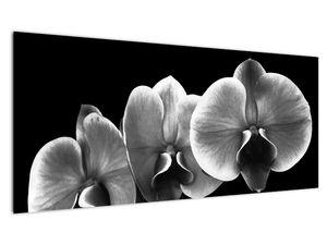Obraz květu orchideje (V022015V10040)