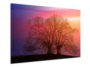 Obraz stromů v mlze (V020088V10070)