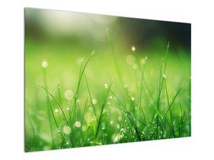 Obraz - rosa na trávě (V020169V10070)