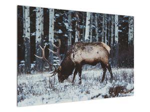 Obraz - jeleň v zime (V020179V10070)