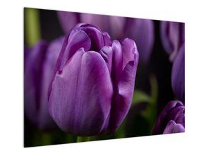 Obraz květů tulipánů (V020215V10070)